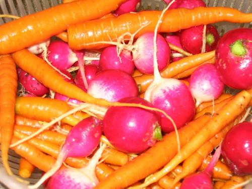 Морковь и редиска