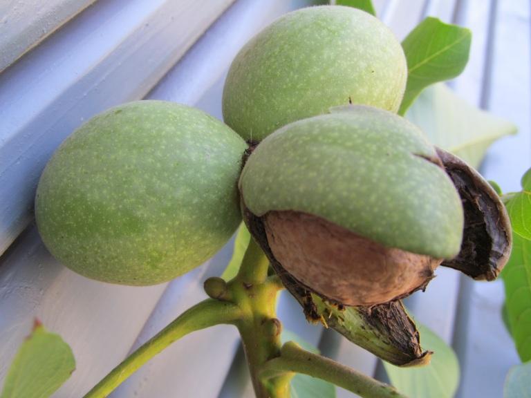 Три орешка