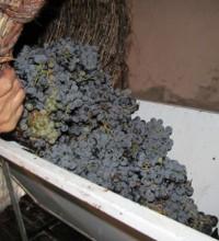 Дробилка для винограда