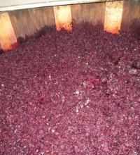 Брожение виноградного сока