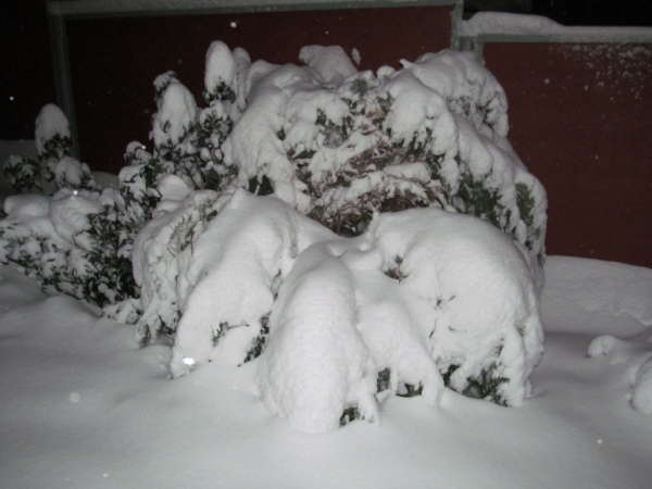 Кустарники под снегом