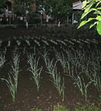 После майского дождика